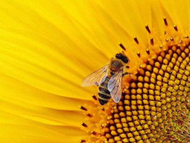 Come scegliere un'arnia per apicoltura