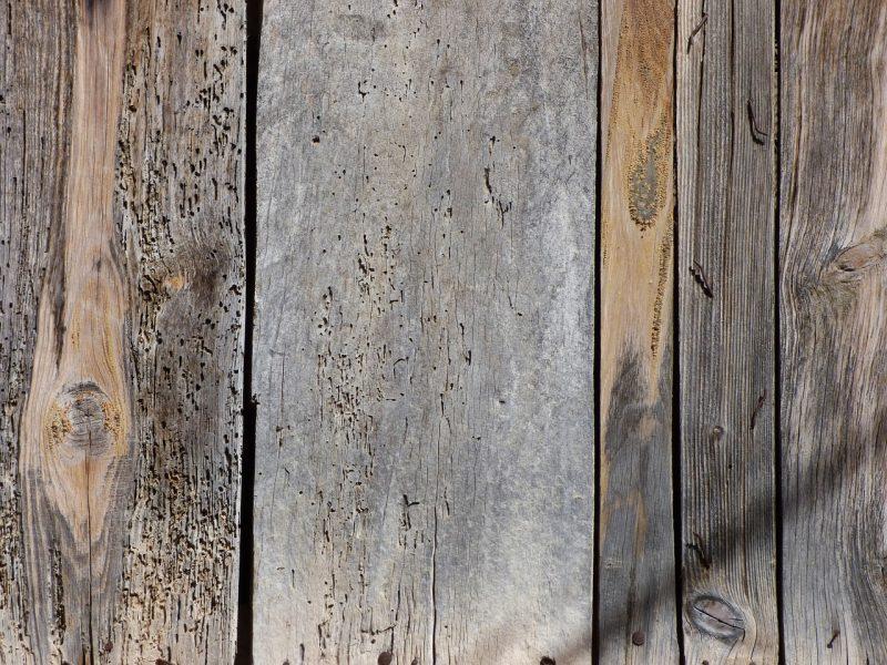 Come effettuare una disinfestazione dalle termiti