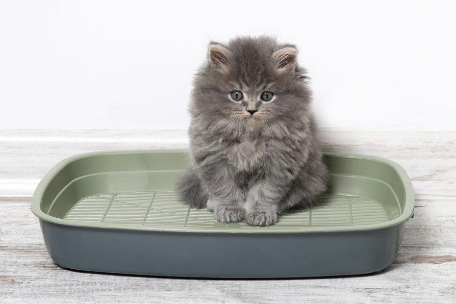 Addestrare il gatto all'uso della lettiera consigli utili